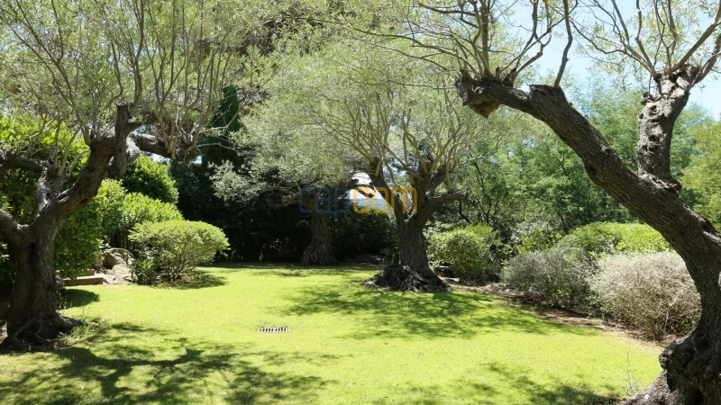 Villa for sale Les Parcs Saint Tropez - gardens