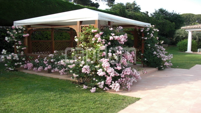 Villa for sale  Cap d'Antibes private domain - pergola with roses