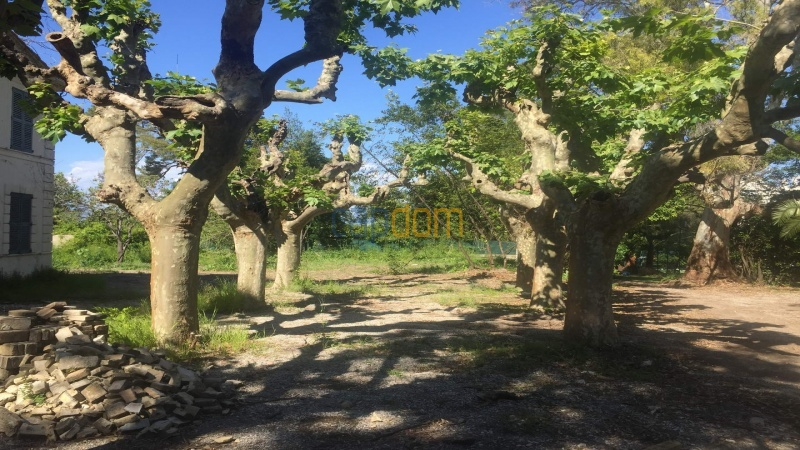 Property to restore Salis Beach Cap d Antibes - old plane trees
